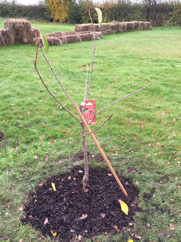 Fruit Tree Planting - SEAG - Shipley Eco-Action Group