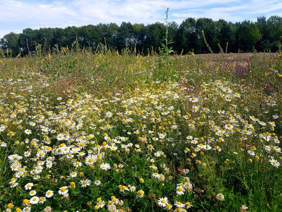 Naturescape Wildflower Farm visit on 30.07.20 - SEAG - Shipley Eco-Action Group