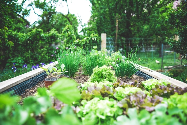 How to avoid waste and grow  your own food - SEAG - Shipley Eco-Action Group
